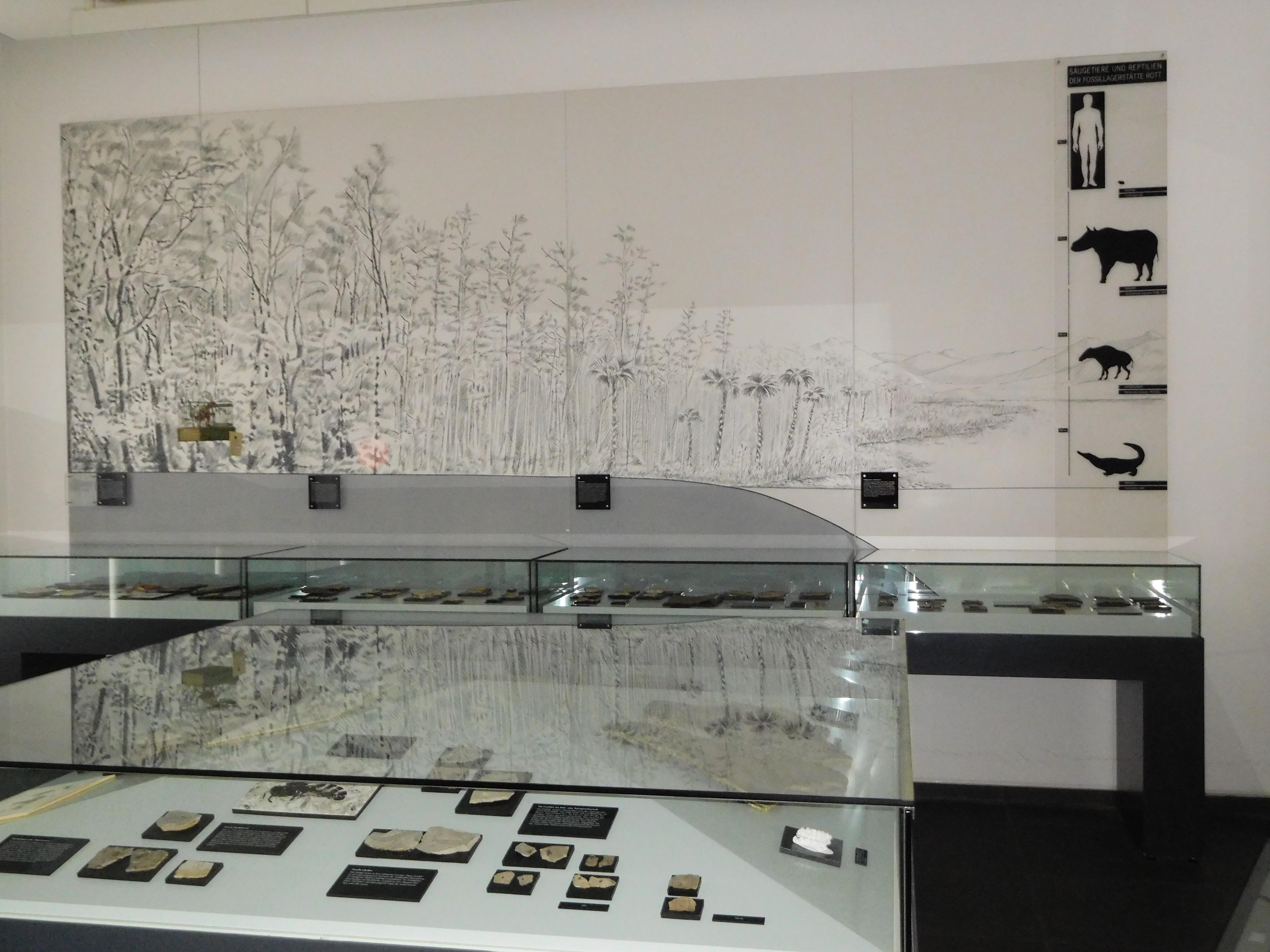Ein Blick in die Abteilung zur Vor- und Frühgeschichte Siegburgs