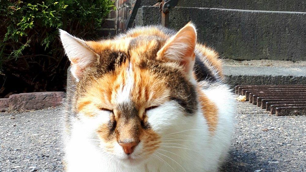 Katze mit geschlossenen Augen vor einer Treppe