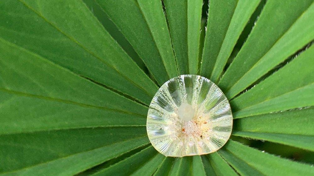 Wassertropfen in einem Blatt