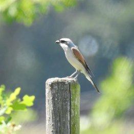Die Vogelwelt der Wahner Heide