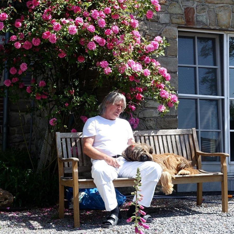 Im Sitzen schlafender Mann und Hund auf einer Bank unter einem Rosenstock