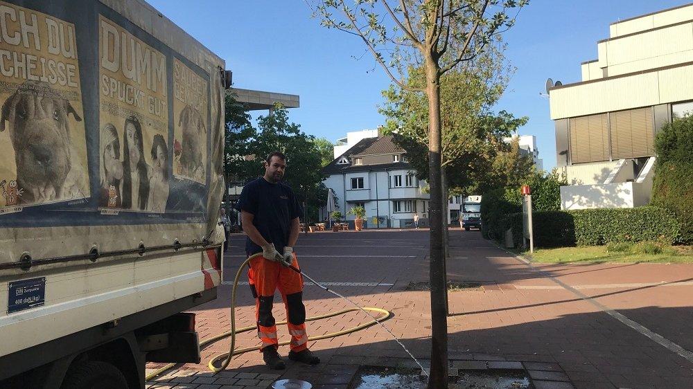 Bewässerung eines Straßenbaums