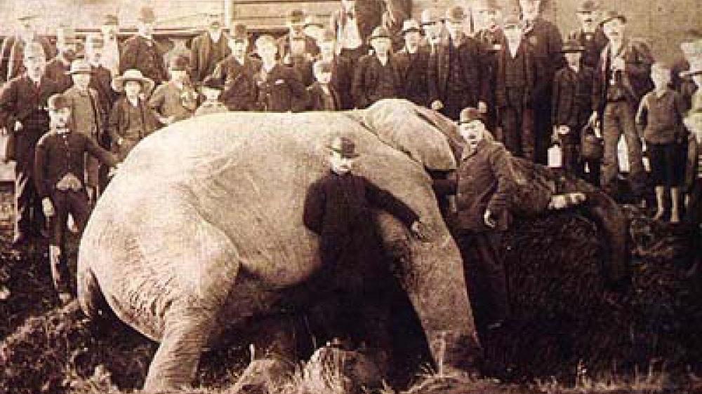 Weltberühmter Zirkuselefant Jumbo wurde beim Umladen in Ontario von einer Lokomotive erfasst