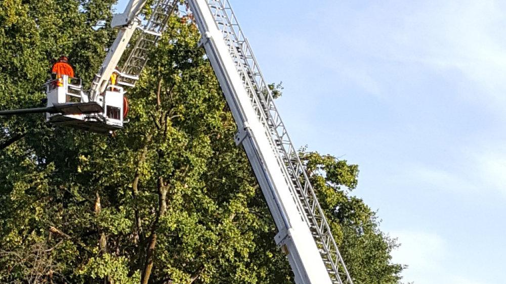 Baumfällung in Seligenthal