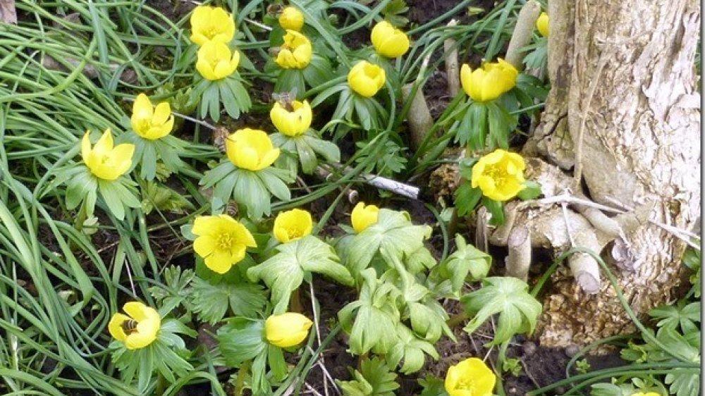 Biene in Winterlingen