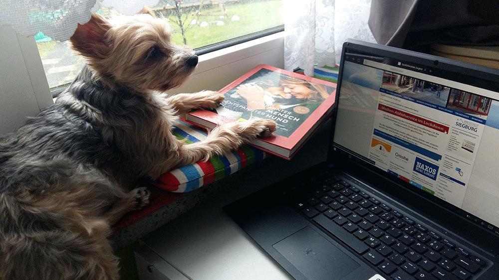 kleiner Hund, PC und Buch