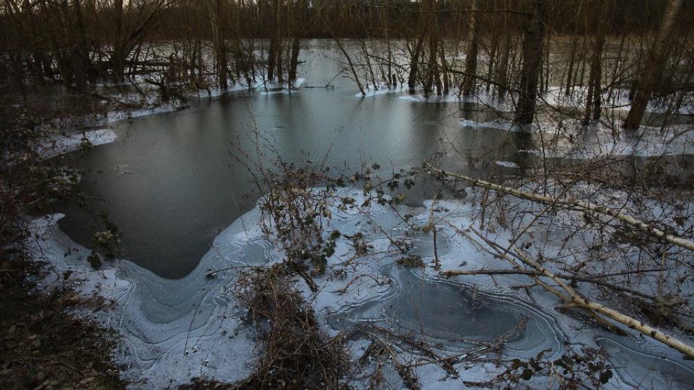 Eis im Auwald
