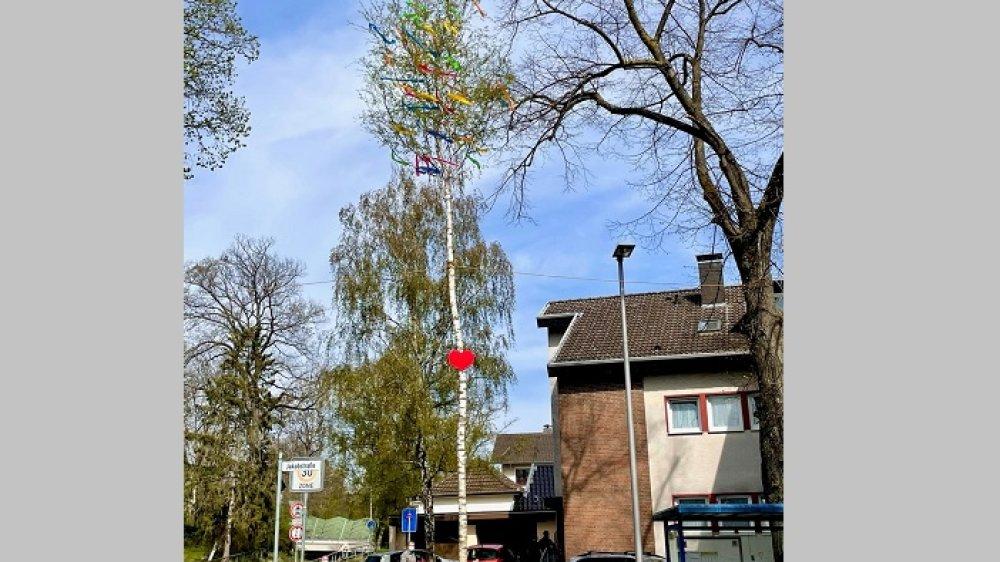 Aufgestellter Maibaum des JGV-Rosenhügel an der Jakobstraße