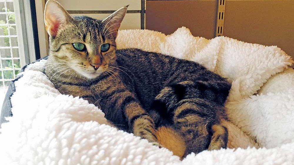 Die Katze Kiki im Korb