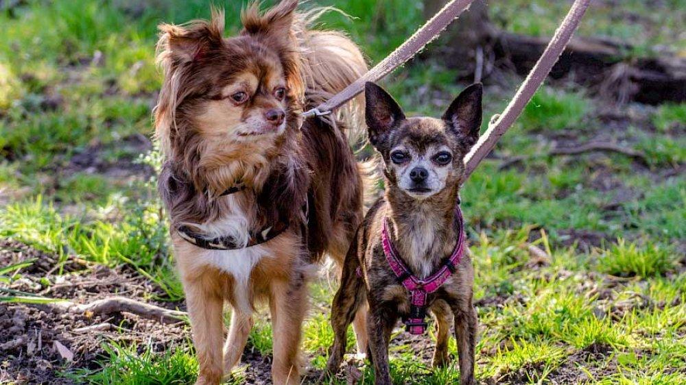 Die Hunde Coco und Muffin
