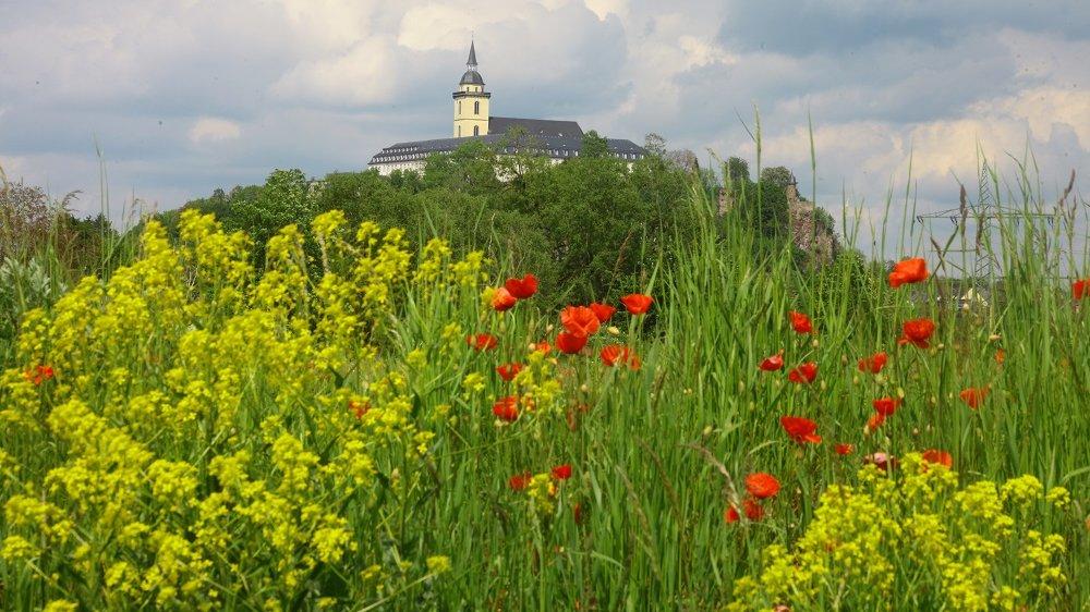 Michaelsberg zwischen grau-weiß bewölktem Himmel, grünem Gras, gelbem Raps und rotem Mohn