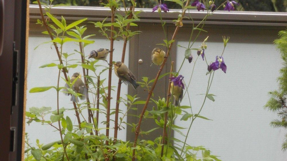 Meisen sitzen auf kleinen Ästen einer Pflanze