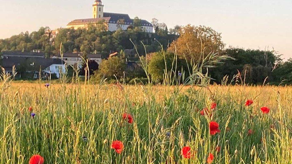 Der Michaelsberg, vorne eine Wiese mit Mohnblumen