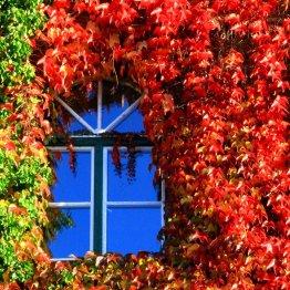 Siegburgs coole Fassaden