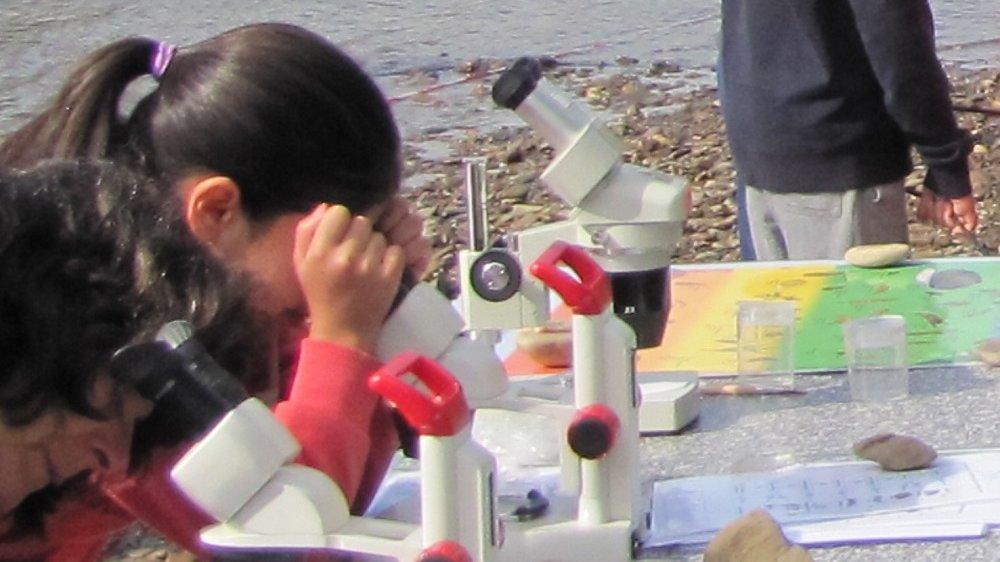 Kinder beim Mikroskopieren am Siegufer