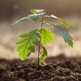 Mit Bäumen für das Klima